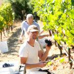 Guys picking grapes