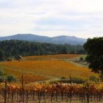 Vineyard land