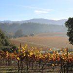 Vineyard at noon