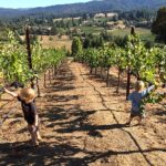 Kids in vineyard