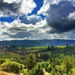 Vineyard Greenery