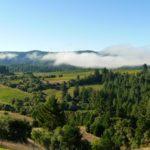Green Trees in vineyard
